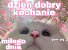 Polish Memes, Sweet Memes, Heart Meme, Cute Love Memes, Cute Texts, Cute Cats And Dogs, Wholesome Memes, Reaction Pictures, Love Pictures