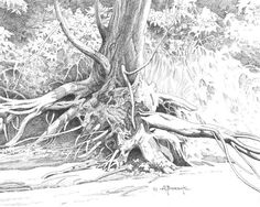 Beautiful Tree Drawings for Inspiration 2017 Tree Drawings Pencil, Art Drawings, Tree Roots, Tree Wallpaper, Landscape Drawings, Landscapes, Trendy Tree, Tree Forest, Realistic Drawings