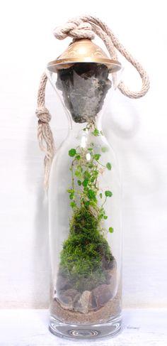 terrarium