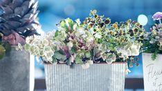 Gardening Magazines, Gardening Tools, Garden Soil, Edible Garden, Vegetable Garden, Weed Killer, Garden Quotes, Garden Guide, Types Of Soil