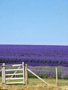 My inner landscape  I would love to see a field of lavender