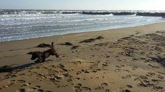 Grenzenlose Freiheit im Jänner genießen Am Meer, Beach, Water, Dogs, Animals, Outdoor, Nature Reserve, Freedom, Vacation