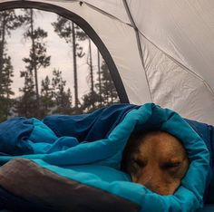 RV And Camping. Ideas To Help You Plan A Camping Adventure To Remember. Camping can be amazing. You can learn a lot about yourself when you camp, and it allows you to appreciate nature more. There are cheerful camp fires and hi Cute Baby Animals, Animals And Pets, Funny Animals, Cute Puppies, Cute Dogs, Dogs And Puppies, Doggies, Dachshunds, Zelt Camping