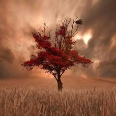 Find images and videos about nature, red and tree on We Heart It - the app to get lost in what you love. Lone Tree, Belle Photo, Amazing Nature, Pretty Pictures, Amazing Pictures, Beautiful Landscapes, The Great Outdoors, Wonders Of The World, Mother Nature