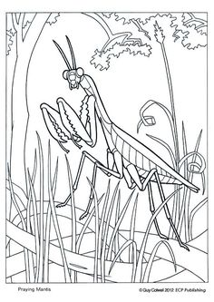 Praying Mantids Printout from EnchantedLearning