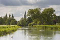 Salisbury Cathedral, UK. Britain's tallest spire and home of one copy of the Magna Carta