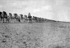 Camel train WW1  photo by Arthur Edwin Smith