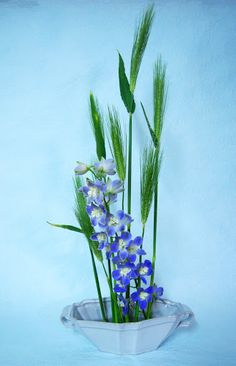 Barley and delphinium