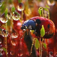Ladybug dew color