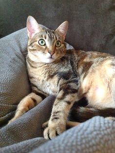 Emmy watches tv.