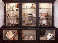 Google Image Result for http://1.bp.blogspot.com/--iKdrix_3hQ/ThSHyS4Vk2I/AAAAAAAABuo/xnAUhHroZiI/s1600/cabinet-of-curiosities.jpg