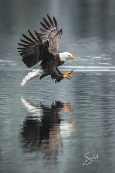 Majestic Eagles Photo Contest Winners - ViewBug.com