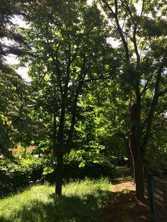 Il sole il vento le fronde degli alberi illuminati dai raggi. Meravigliose sensazioni dalla natura musica per le orecchie e per lustro gli occhi