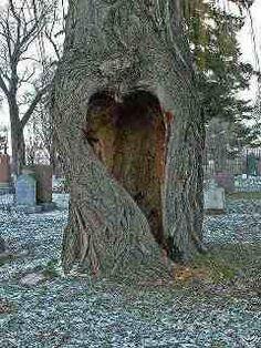 Wish I had this tree in my yard!