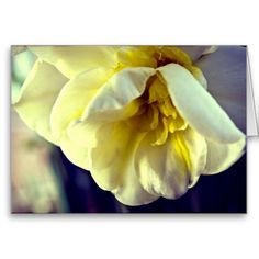 Narcissus Daffodil Greeting Cards from Florals by Fred #zazzle #gift