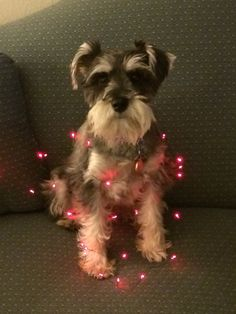 Dempsey is ready for Christmas!