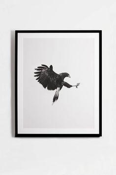 Geoffrey Knott — Harris Hawk — THE LINE