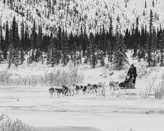 ❄️🌲🐶#tgif Unser Hundeschlitten steht schon aufgetankt vor der Tür #waidlife #passion #lifestyle #jagd #waidmannsheil #hunting #jakt #jager #jagerin #hunter #huntress #hunt #outdoor #wirsinddraussen #backtonature #wald #filson #forest #bushcraft #bushcraftgear #landscape #travel #hiking #wanderlust #naturelovers #adventure #herbst #natur #draussenzuhause Lifestyle Shop, Back To Nature, Bushcraft, Land Scape, Wanderlust, Snow, Outdoor, Shopping, Hunting