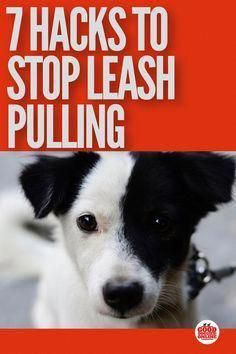 Get Free Guide Ideas And Help For Easy Train Dog When You Have