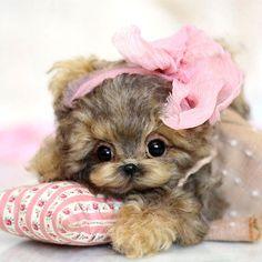 6-3-OOAK-Yorkie-puppy-Mia-by-Anna-Volkova