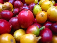 Slovenská plantáž dobrej kávy El Colibrí vKolumbii