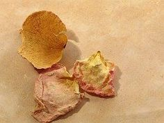 What to Do With Dried Rose Petals?