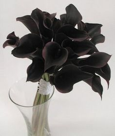Calla Lillies are my favorite! So delicate  black calla lillies #feelbeautiful #whbm