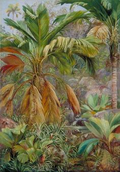 Wild Pine Apples and Stevensonia, and Other Palms, Praslin by Marianne North; c. 1882; Oil on board; Collection: Royal Botanic Gardens, Kew, England