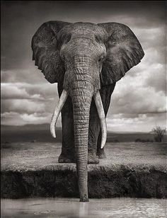 Best 25  African Elephant ideas on Pinterest | Elephants, Elephant ...