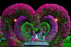 heart flower by Rustam azmi on 500px