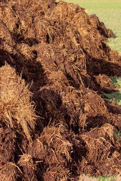 compostul (2)