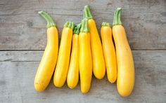 Organic Golden Zucchini (C. pepo) - This beautiful yellow zucchini is a compact bush type plant that is perfect for those with limited space in their gardens. It is a prolific producer of dazzling gol Yellow Zucchini, Cabbage Seeds, Still Tasty, Loose Weight Fast, Organic Seeds, Flower Seeds, Nutritious Meals, How To Stay Healthy, Squash