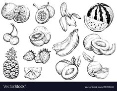 Hand drawn healthy exotic summer fruit sketch vector image on VectorStock Fruits Drawing, Food Drawing, New Fruit, Summer Fruit, Fruits Basket Funny, Art Sketches, Art Drawings, Fruit Sketch, Wood Carving For Beginners