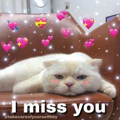 Funny Cartoon Memes, Cute Cat Memes, Cute Love Memes, Funny Love, Funny Relatable Memes, Wholesome Pictures, Love You Meme, Gf Memes, Cute Panda Wallpaper