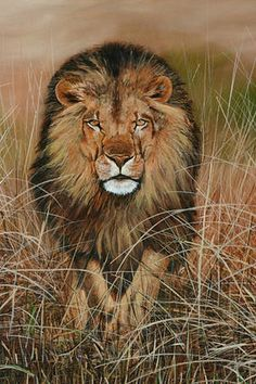 Nico Bulder - Lion attack