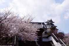 Kakegawa Castle in Shizuoka Prefecture is so beautiful during cherry blossom…