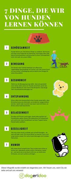 7 Dinge, die wir von Hunden lernen können