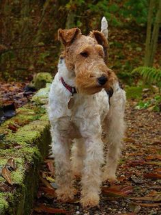 Mollie Mae by Ann McCartney taken in October 2013 in Perthshire