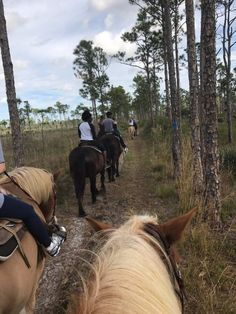 """""""Morning horseback ride, with two guides and a group of 9 riders"""" Jonathan Dickinson Rv Parks, State Parks, Hobe Sound Florida, Fl Keys, Florida Camping, Turtle Beach, Winter Travel, Horseback Riding, Trip Advisor"""