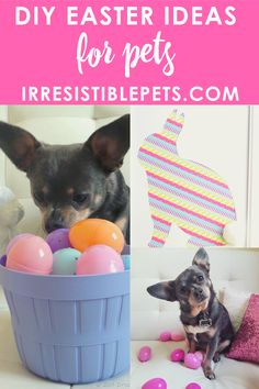 DIY Easter Ideas for Pets - Irresistible Pets Easy Dog Treat Recipes, Homemade Dog Treats, Pet Treats, Frozen Dog, Frozen Apple, Dog Ramp, Animal Projects, Diy Projects, Dog Cakes