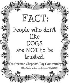 From the Facebook group The German Shepherd Dog Community. A 100% accurate fact.