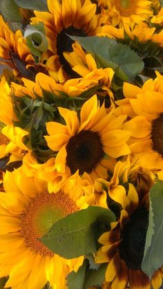 """""""Grateful for another sunflowery market day. Cute Wallpaper Backgrounds, Wallpaper Pictures, Amazing Flowers, Love Flowers, Sunflower Iphone Wallpaper, Herbs For Depression, Herbs For Anxiety, Berry Plants, Sunflower Pictures"""