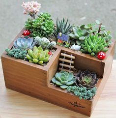 """The succulent box does not include actual succulent plants. But you can shop a variety of succulent plant packs on Amazon here. Promising Review: """"This is the best succulent collection I have ever seen. Each plant is a different variety, with some being ones you rarely find. This is a terrific bargain!"""" —CathyGet them from Amazon: planter box for $13.59 (available in six-grid and three-grid styles) and 12-pack of succulents for $29.99."""