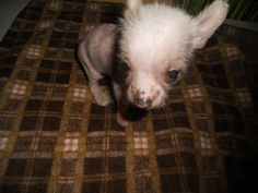 Loki at 6 weeks old