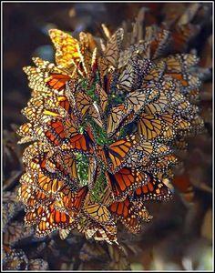 Bunch of butterflies