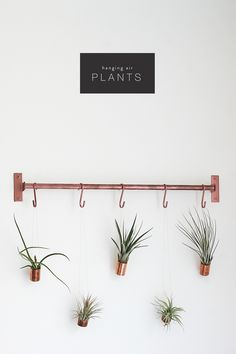 Urban Jungle Bloggers | Hanging Air Plants | Gathered Cheer