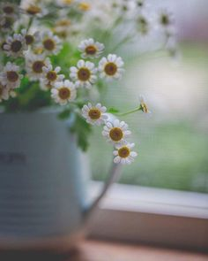 Daisy Love, Anne Of Green Gables, Hydrangea, Flower Power, Dandelion, Daisies, Pretty, Flowers, Plants