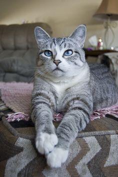 Meet my best friend, Diamond. Adopted her a year ago! - Imgur