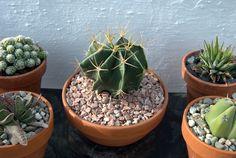 Cactus Estrella - Álora - Febrero 2013