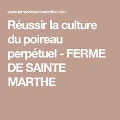 Réussir la culture du poireau perpétuel - FERME DE SAINTE MARTHE
